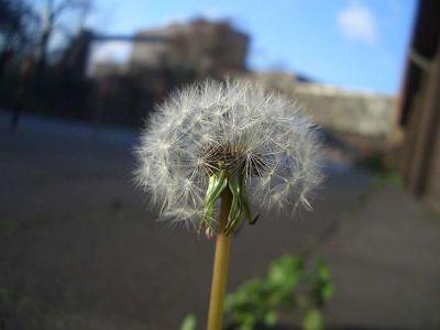 BlumevorStahlwerk2