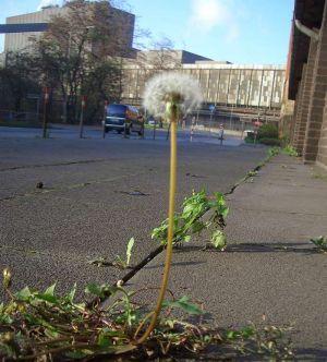 BlumevorStahlwerk3